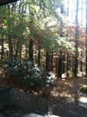 091030forest1